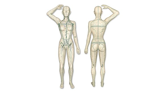 Sistema linfático do corpo humano - Sistema linfático